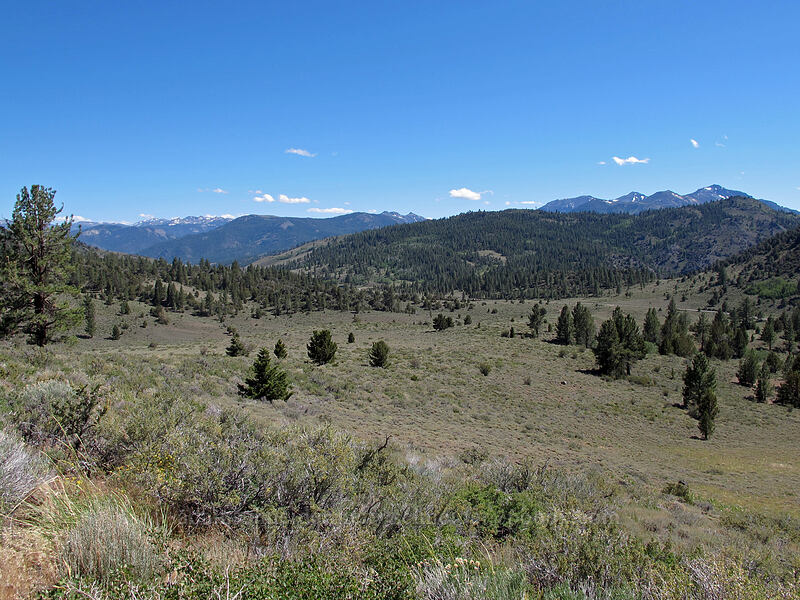 Sagehen Flat & mountains to the south [CA-89, Toiyabe National Forest, California]