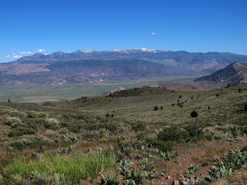 Sweetwater Mountains & Antelope Valley [CA-89, Toiyabe National Forest, California]