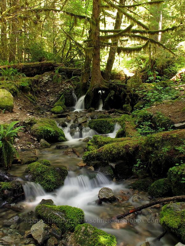 flowy water [Forest Road 2209, Opal Creek Scenic Recreation Area, Oregon]