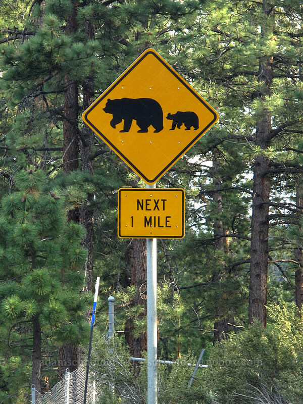 bear crossing sign [U.S. Highway 50, Lake Tahoe Basin, Nevada]