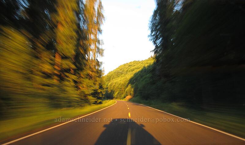 motion blur [Curly Creek Road, Gifford Pinchot National Forest, Washington]