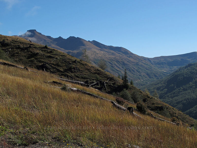 Coldwater Peak [South Coldwater Trail, Mt. St. Helens National Volcanic Monument, Washington]