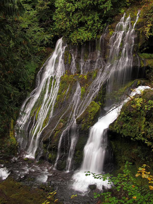 Panther Creek Falls [Trail 137, Gifford Pinchot National Forest, Washington]