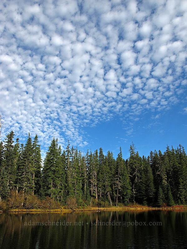 Heather Lake [Thomas Lake Trail, Indian Heaven Wilderness, Washington]