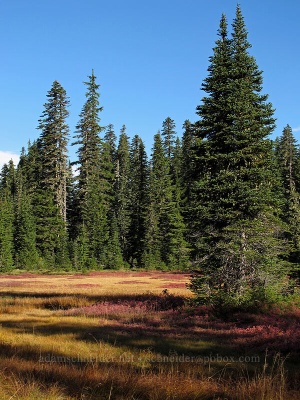 autumn meadow [Thomas Lake Trail, Indian Heaven Wilderness, Washington]