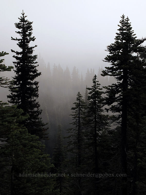 clouds & fir trees [East Crater, Indian Heaven Wilderness, Washington]