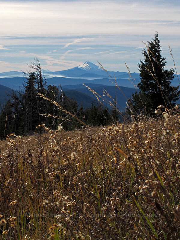 grass & Mt. Jefferson [above White River Canyon, Mt. Hood National Forest, Oregon]