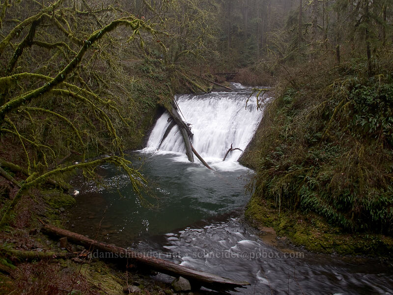 Lower North Falls [Canyon Trail, Silver Falls State Park, Oregon]