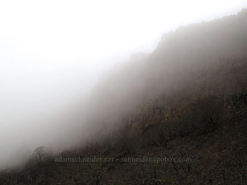 fog & Coyote Wall [Coyote Wall, Klickitat County, Washington]