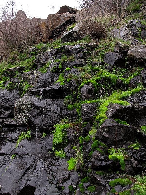 bright green moss [Coyote Wall, Klickitat County, Washington]