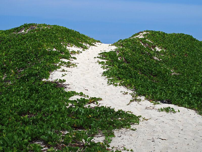 sand dunes [Makalawena Beach, Kekaha Kai State Park, Big Island, Hawaii]