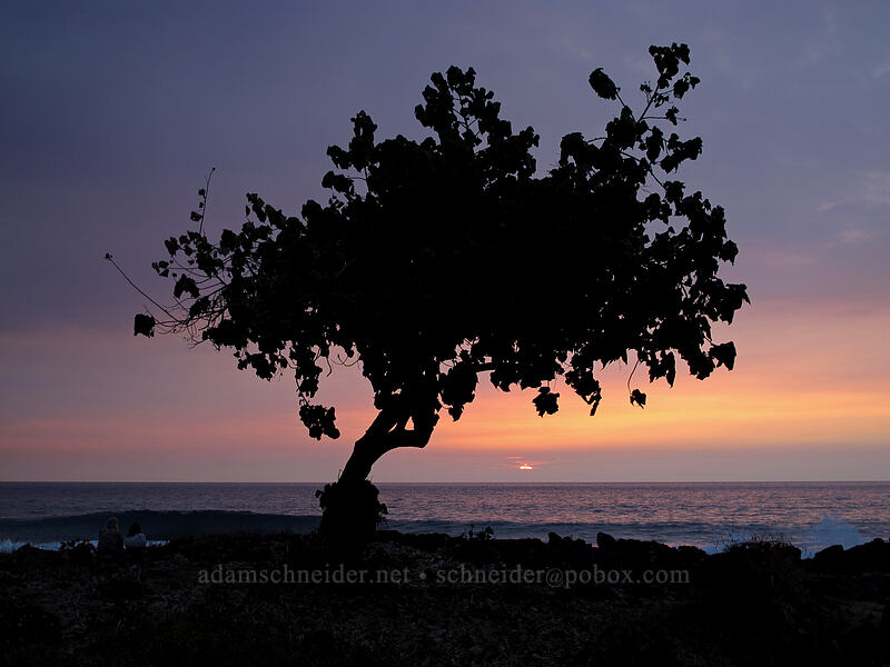 coastal tree at sunset [White Sands Beach Park, Kona Coast, Big Island, Hawaii]