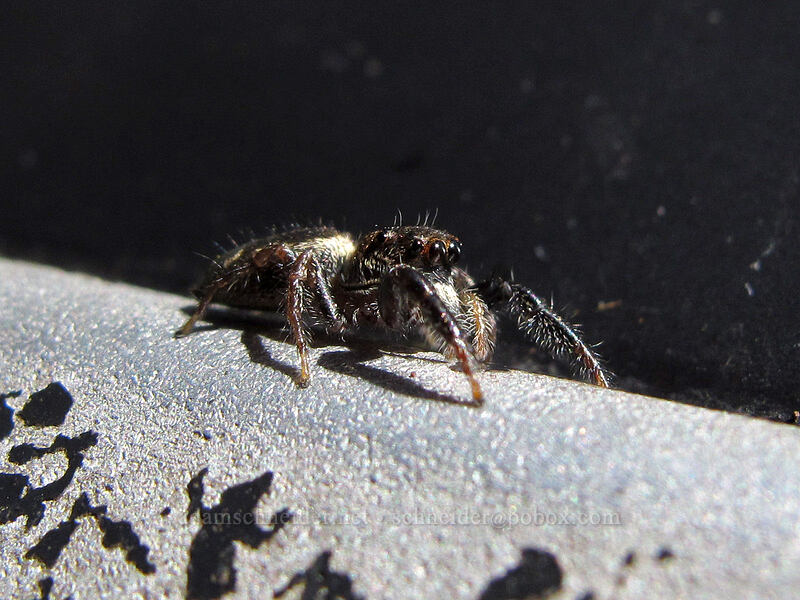spider [Thurston Lava Tube, Hawaii Volcanoes National Park, Big Island, Hawaii]