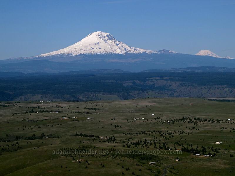 Mt. Adams & Mt. Rainier [Stacker Butte, Columbia Hills State Park, Washington]