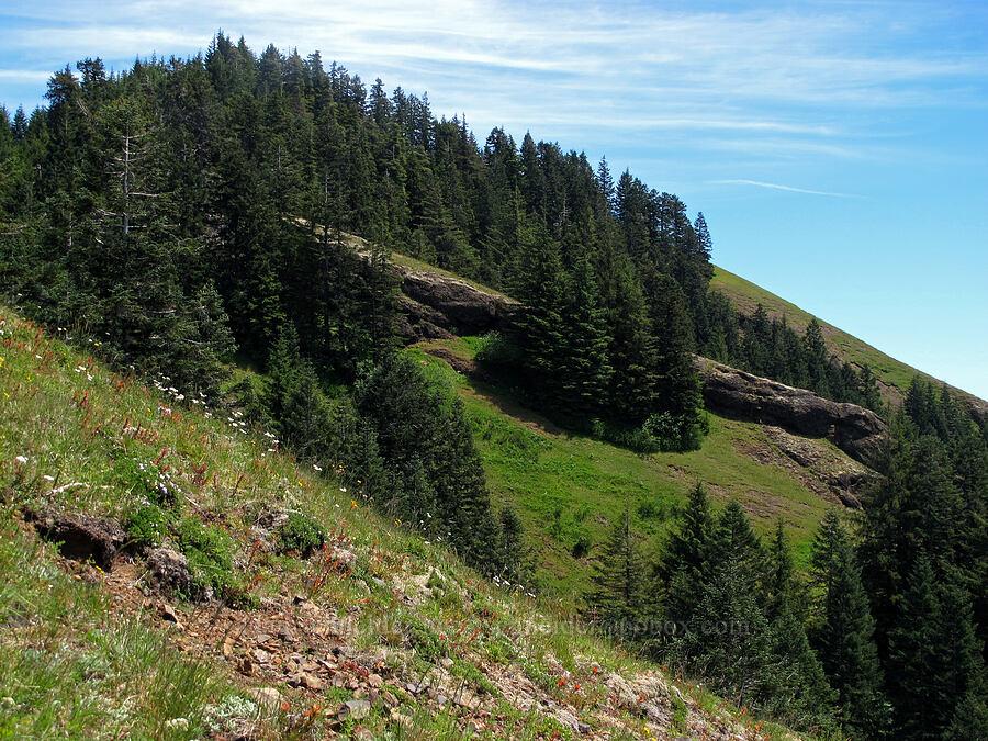 east side of Saddle Mountain [Saddle Mountain Trail, Clatsop County, Oregon]