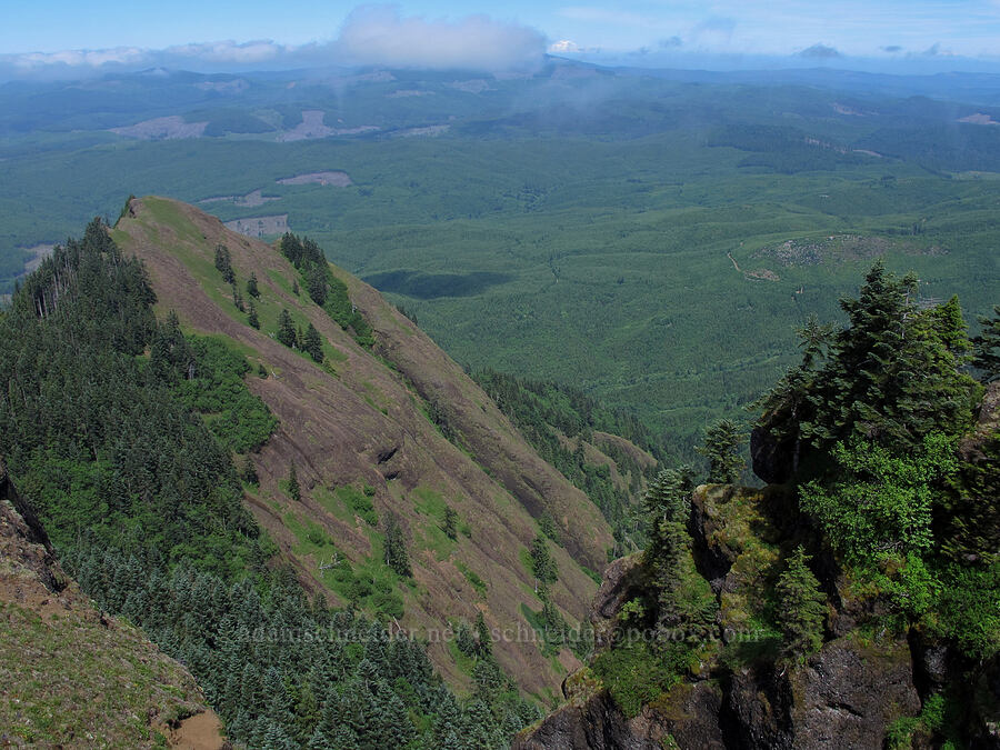 view to the northeast [Saddle Mountain summit, Clatsop County, Oregon]