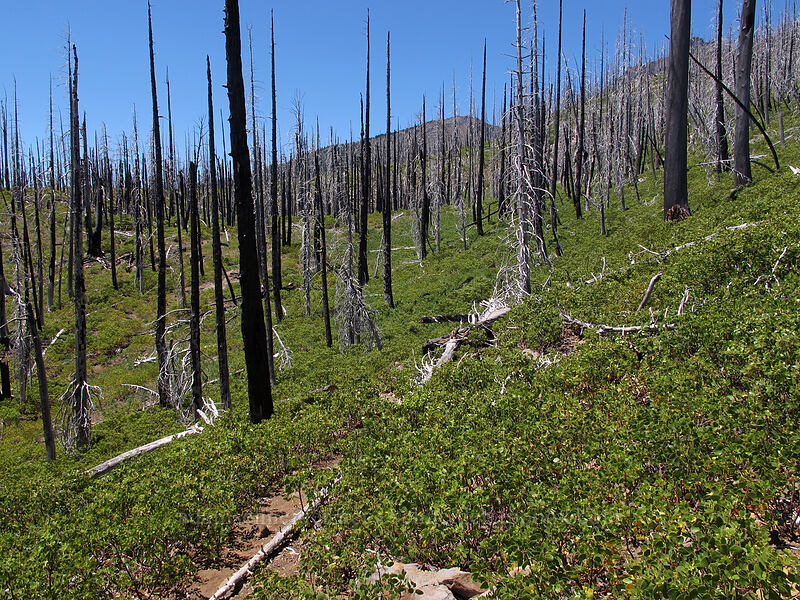 B&B Fire [Summit Lake Trail, Mt. Jefferson Wilderness, Oregon]