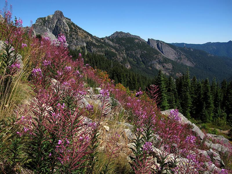 fireweed & Hibox Mountain (Chamerion angustifolium (Epilobium angustifolium)) [Rampart Ridge, Alpine Lakes Wilderness, Washington]