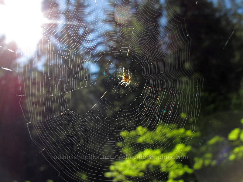 spider web [Rachel Lake Trail, Alpine Lakes Wilderness, Washington]