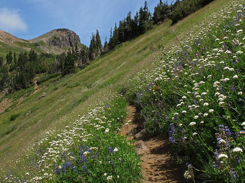 trail through wildflowers [Goat Ridge Trail, Goat Rocks Wilderness, Washington]