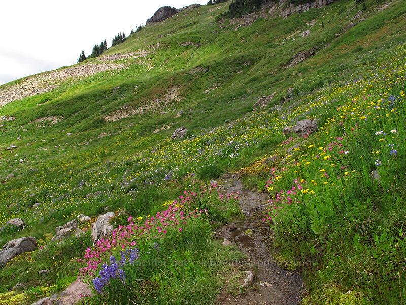 wildflowers [Lily Basin Trail, Goat Rocks Wilderness, Washington]