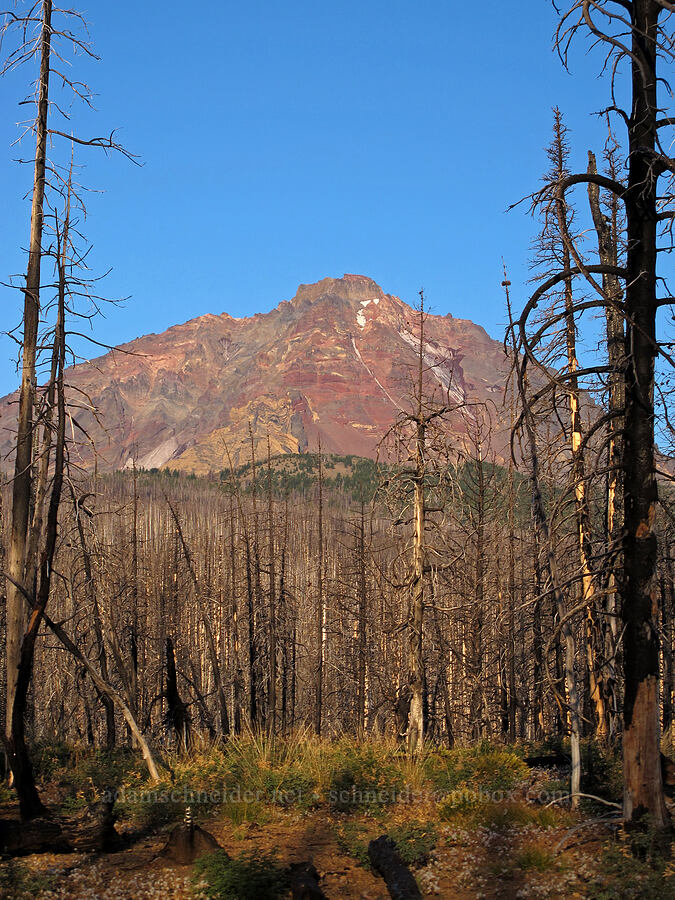 North Sister through burnt trees [Pole Creek Trail, Three Sisters Wilderness, Oregon]