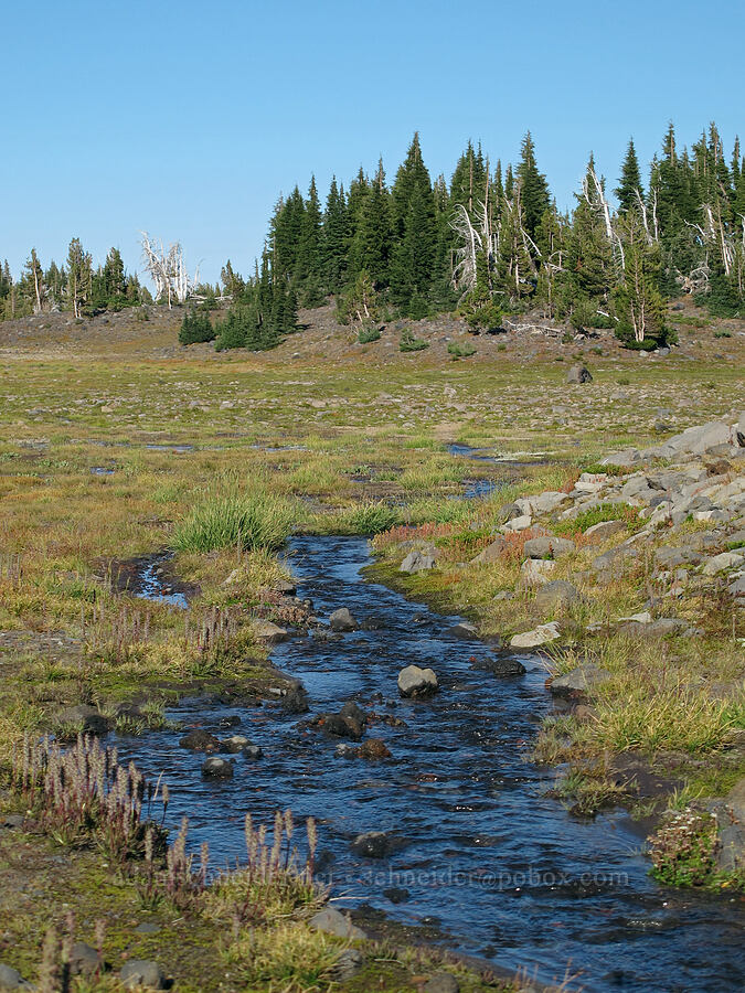 streams [near Camp Lake, Three Sisters Wilderness, Oregon]