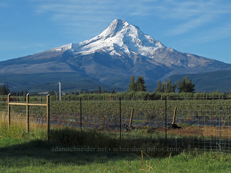 Mt. Hood from the Hood River Valley [Highway 35, Hood River County, Oregon]