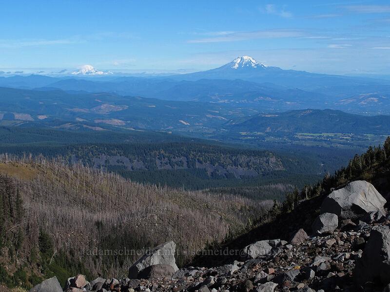 Mt. Adams & Mt. Rainier [Timberline Trail, Mt. Hood Wilderness, Oregon]