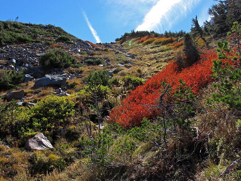 fall colors [below Langille Glacier, Mt. Hood Wilderness, Oregon]