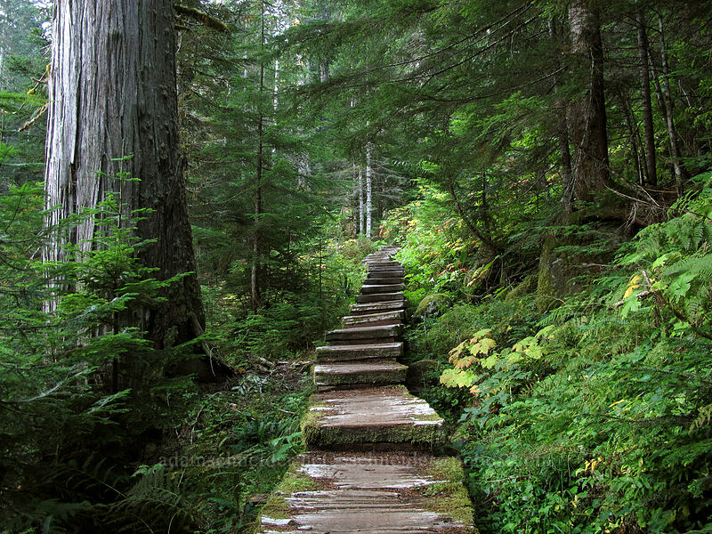 steps [Surprise Creek Trail, Mt. Baker-Snoqualmie National Forest, Washington]