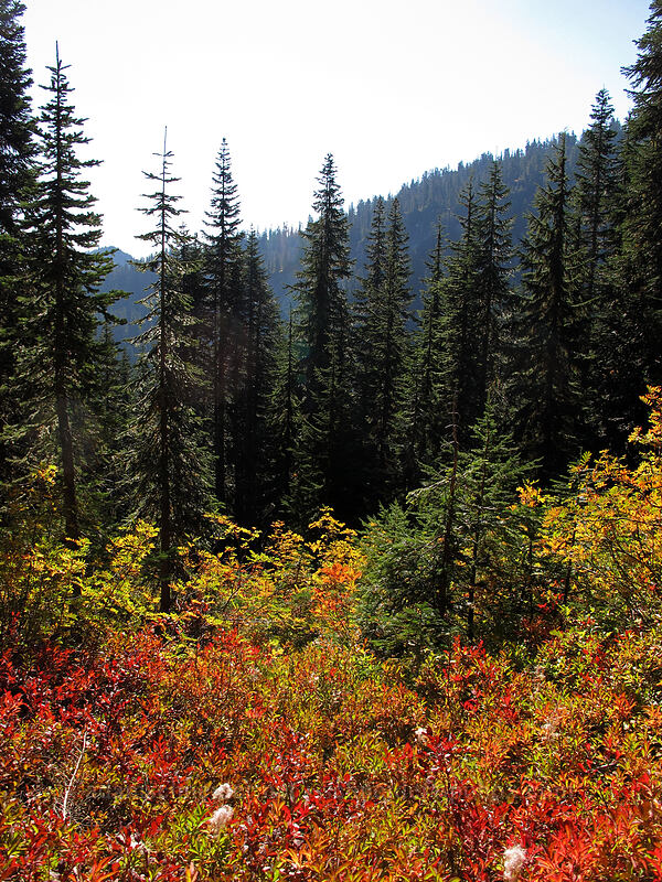 fall colors [Pacific Crest Trail, Henry M. Jackson Wilderness, Washington]