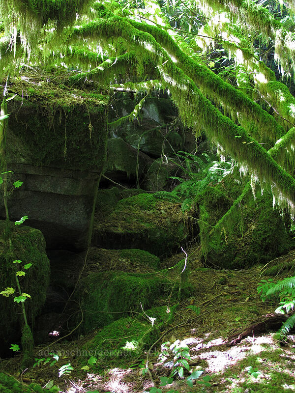 mossy glen [Index Town Wall, Index, Washington]