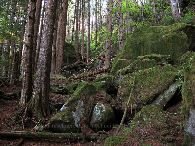 mossy boulders [Index Town Wall, Index, Washington]