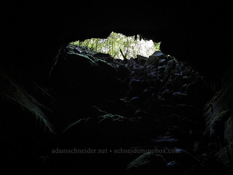 cave entrance [Falls Creek Cave, Gifford Pinchot National Forest, Washington]