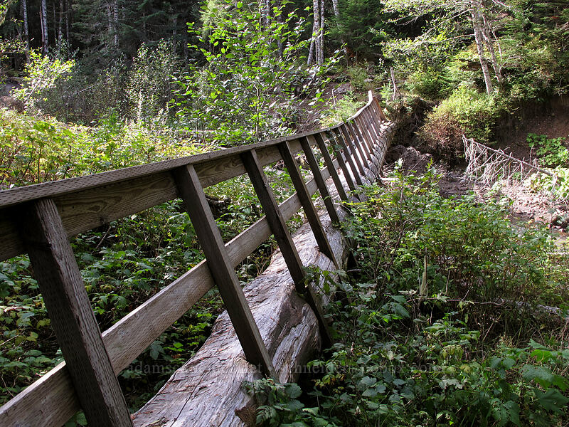 tilted log bridge [Old Pacific Crest Trail, Mt. Hood National Forest, Oregon]