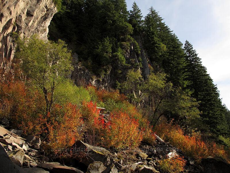 cliffs & fall colors [Ramona Falls Trail, Mt. Hood Wilderness, Oregon]