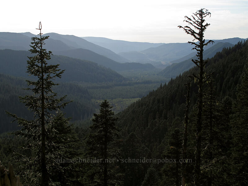 Sandy River Valley [Pacific Crest Trail, Mt. Hood Wilderness, Oregon]