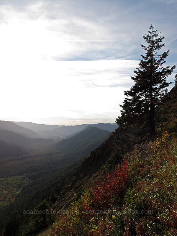 Sandy River Valley [Bald Mountain, Mt. Hood Wilderness, Oregon]
