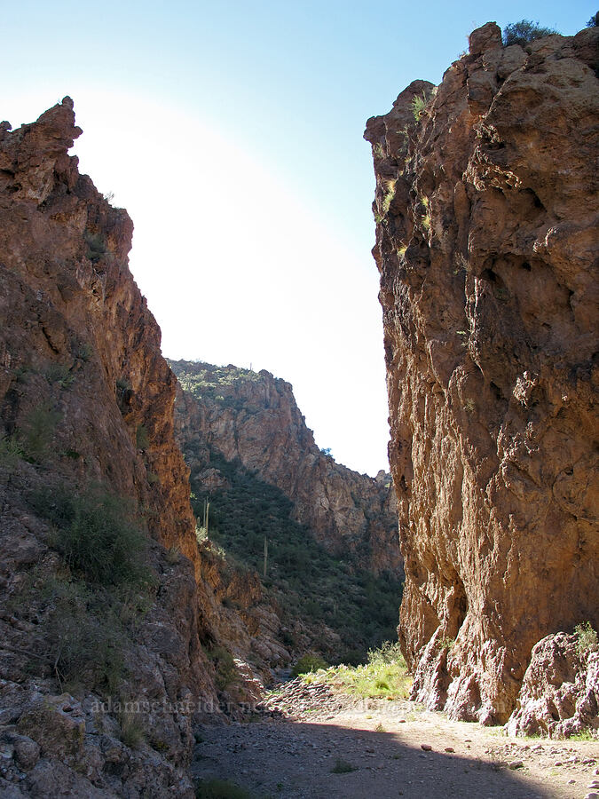 narrow canyon walls [Lower La Barge Canyon, Superstition Wilderness, Arizona]