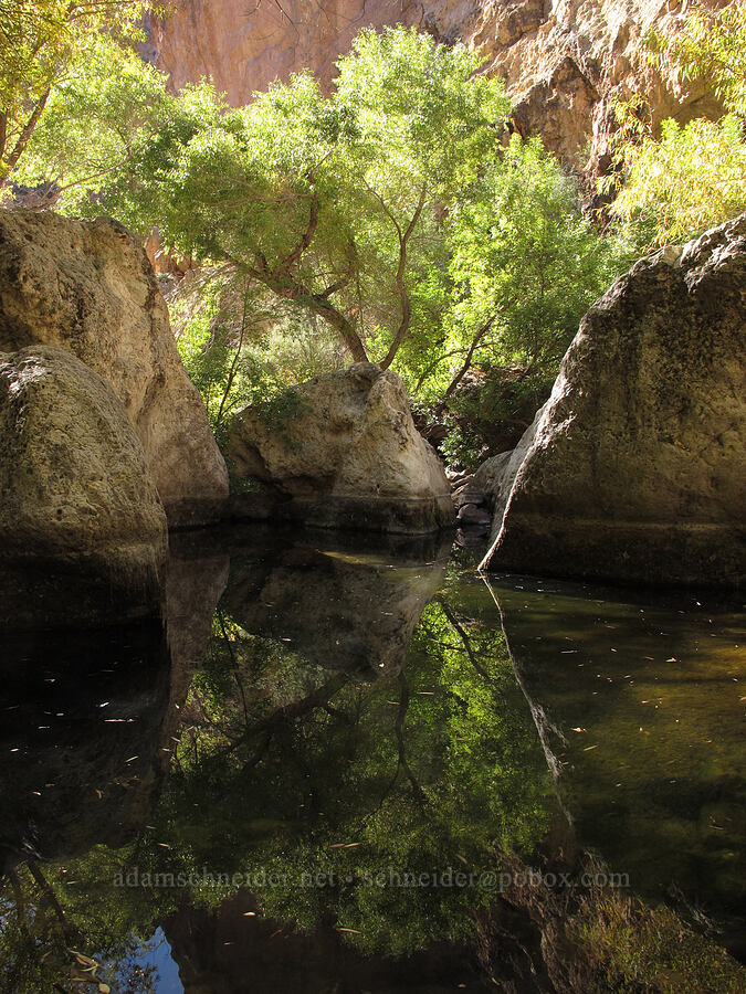 reflected trees [Lower La Barge Canyon, Superstition Wilderness, Arizona]