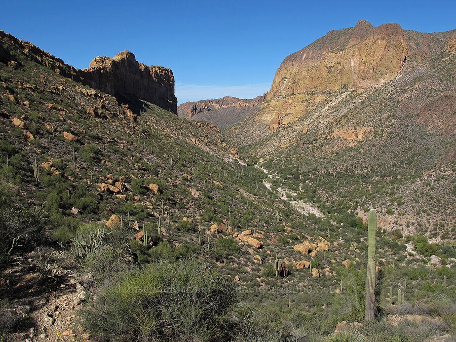 Battleship Mountain & Geronimo Head [Boulder-La Barge saddle, Superstition Wilderness, Arizona]
