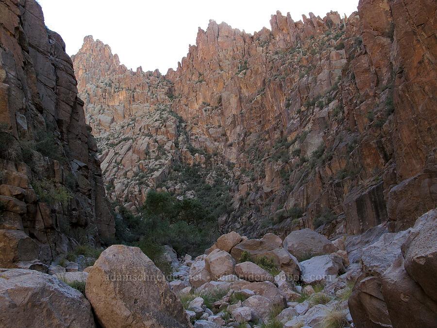 box canyon [La Barge Box Canyon, Superstition Wilderness, Arizona]