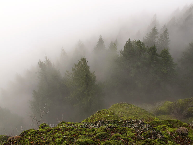 foggy trees below [Hamilton Mountain Trail, Beacon Rock State Park, Washington]