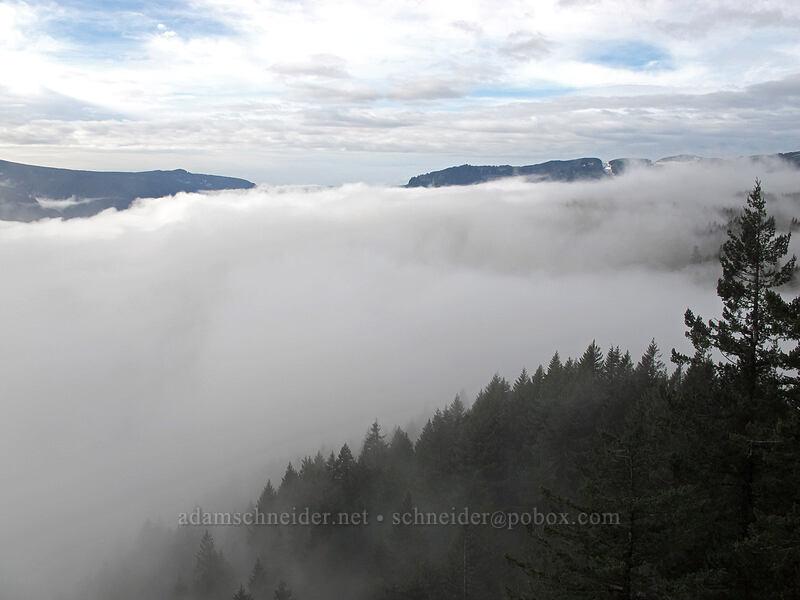 fog in the western Gorge [Hamilton Mountain Trail, Beacon Rock State Park, Washington]