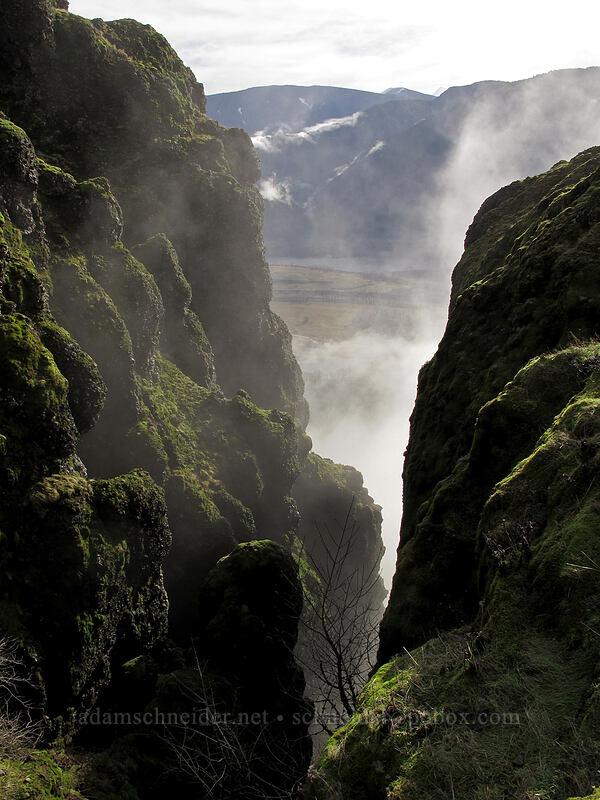 cliffs & fog [Hamilton Mountain Trail, Beacon Rock State Park, Washington]