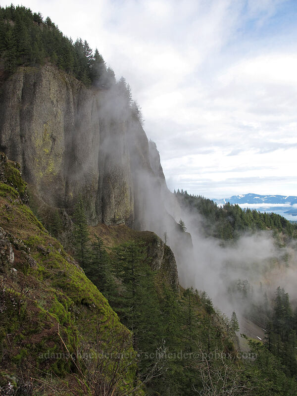 edge of Hamilton Mountain [Little Hamilton Mountain, Beacon Rock State Park, Washington]