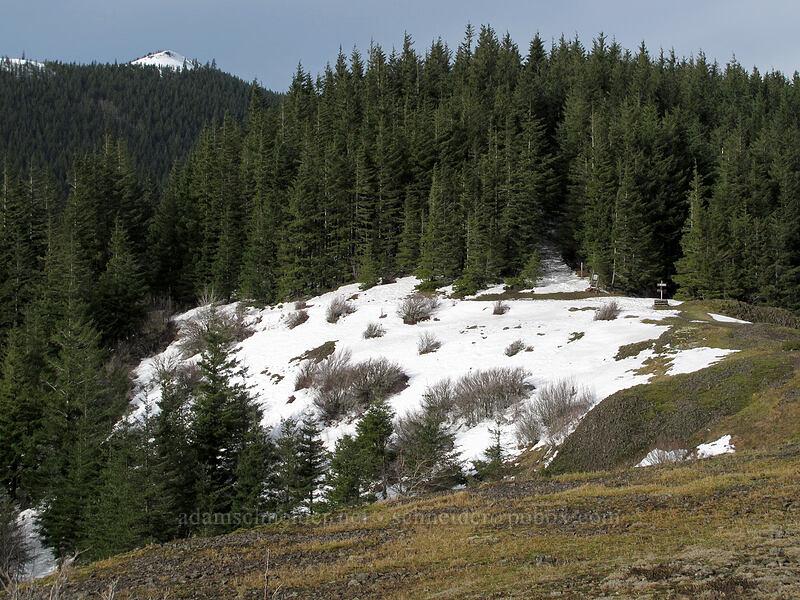 Phlox Point & Hamilton Mountain saddle [Hamilton Mountain Trail, Beacon Rock State Park, Washington]