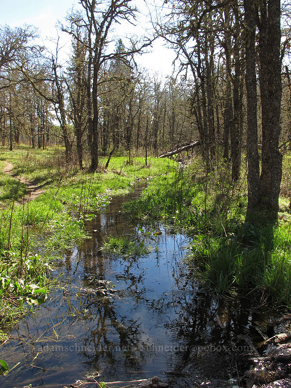 stream from Wetland Spring [Memaloose Hills, Wasco County, Oregon]