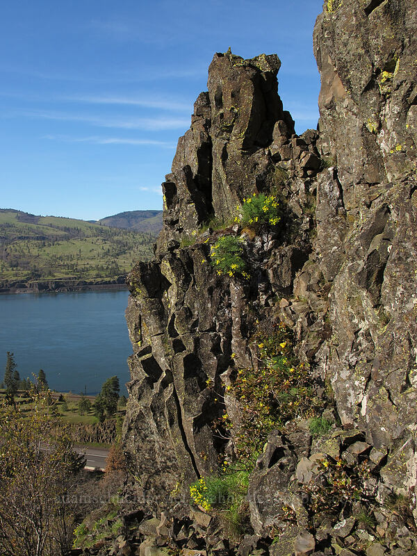 basalt pinnacle [Memaloose Pinnacles, Wasco County, Oregon]